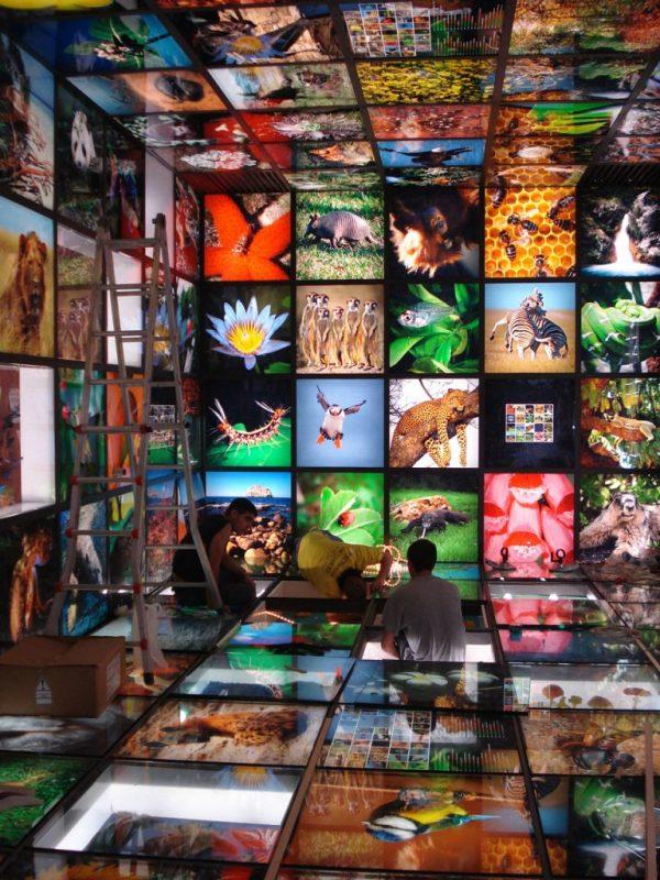 Caja de la biodiversidad